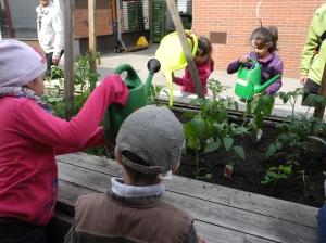 Die SchülerInnen der VS Haebergasse giessen fleissig ihre Pflanzen - 24.5.2013